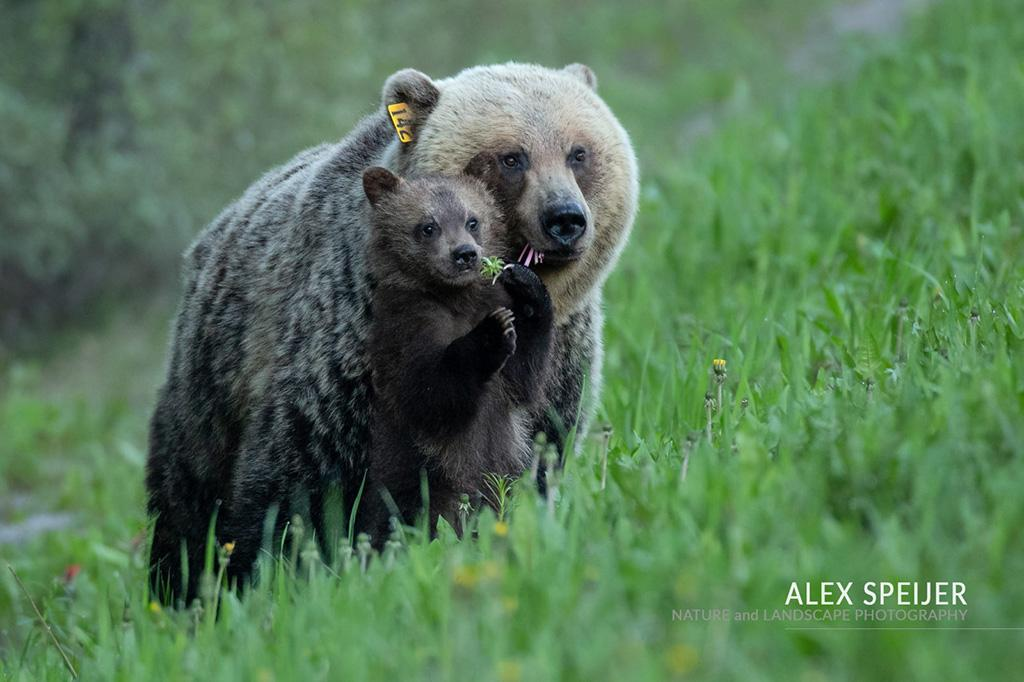 "Today's Photo Of The Day is ""Family Portrait"" by Alex Speijer. Location: Banff National Park, Alberta."