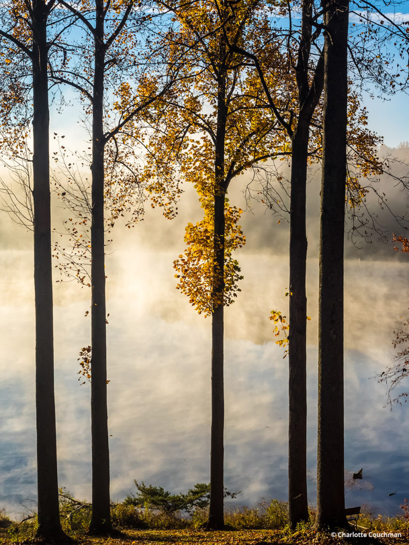 "Today's Photo Of The Day is ""Morning Mist on Clopper Lake"" by Charlotte Couchman. Location:  Seneca Creek State Park, Montgomery County, Maryland."