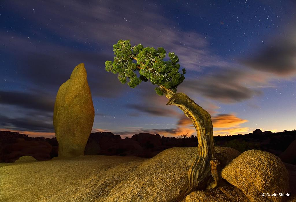 """Today's Photo Of The Day is """"Magnetic"""" by David Shield. Location: Joshua Tree National Park, California."""