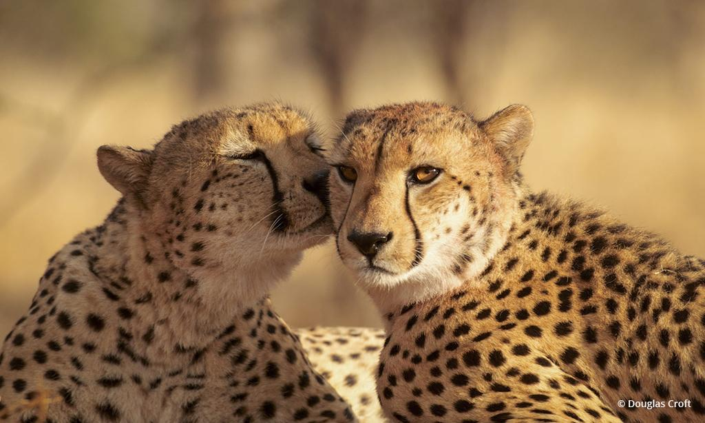 "Today's Photo Of The Day is ""A Little Kiss"" by Douglas Croft. Location: Kruger National Park, South Africa."