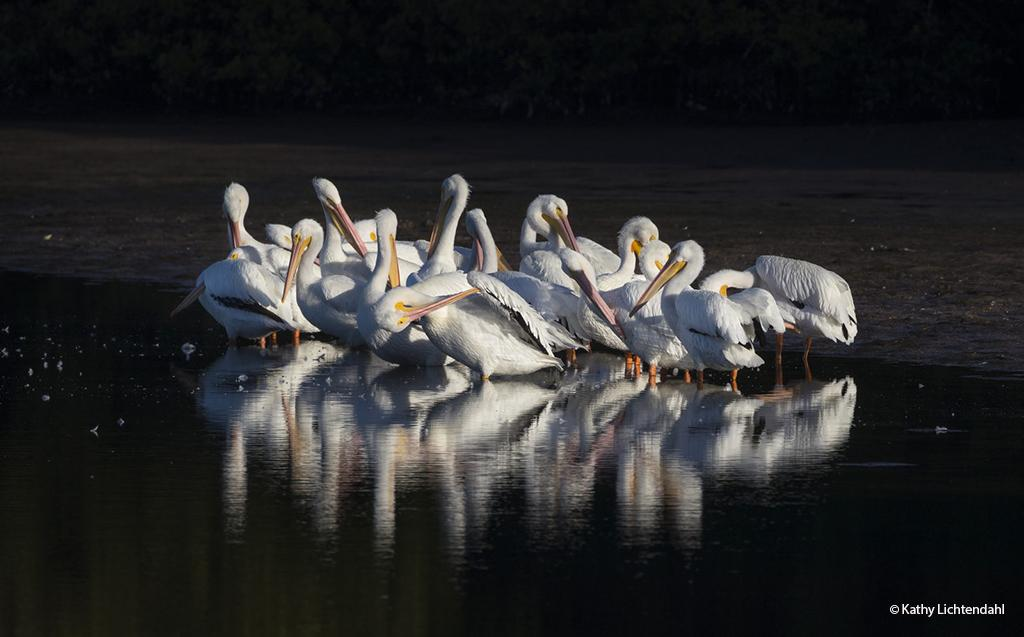 "Today's Photo Of The Day is ""Early Morning Preening"" by Kathy Lichtendahl. Location: Bradenton, Florida."