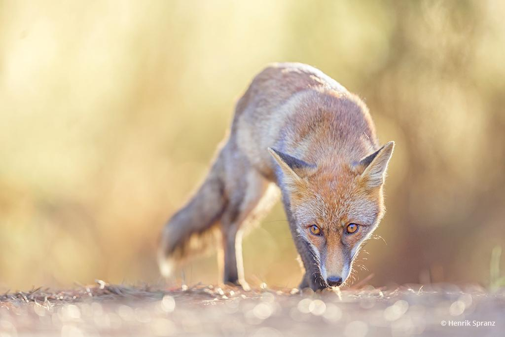 "Today's Photo Of The Day is ""Stalking"" by Henrik Spranz."