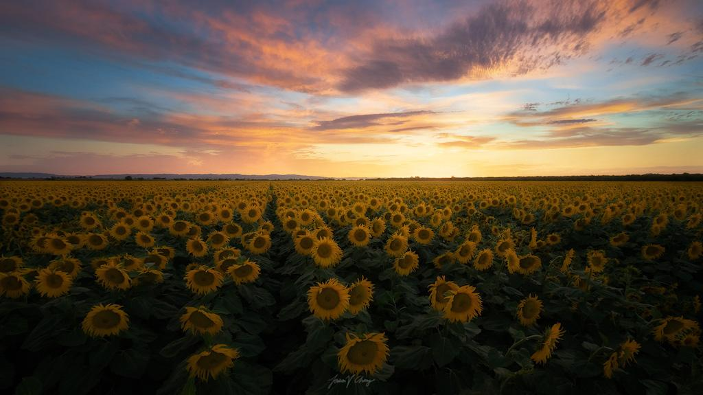 Summer Sunrises And Sunsets Assignment Winner Jason Chong