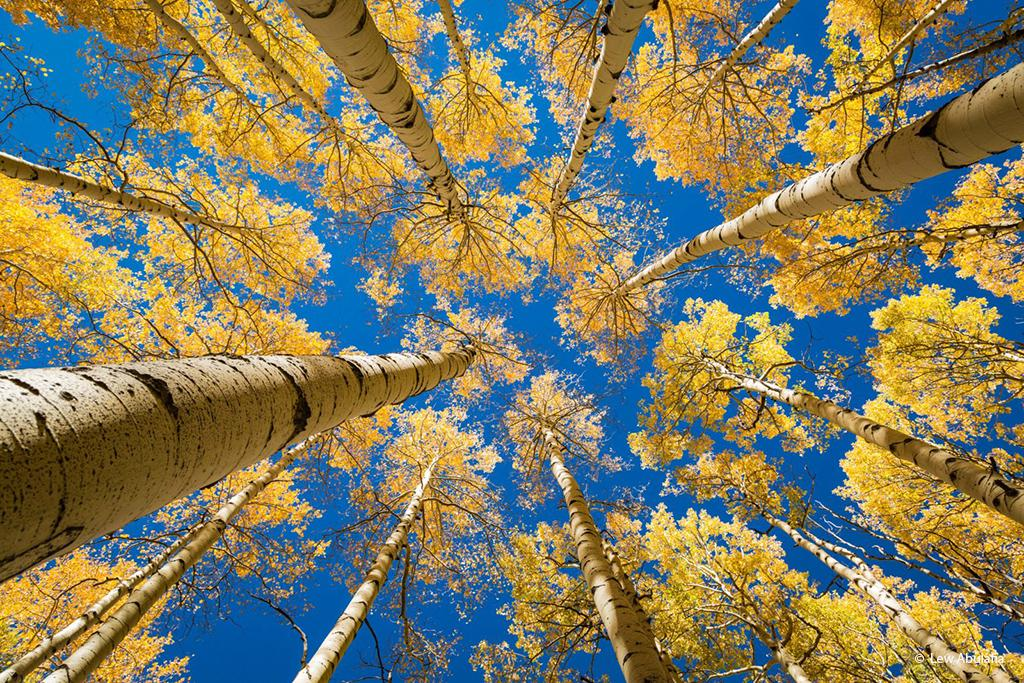 "Today's Photo Of The Day is ""Colorado Golden Aspens"" by Lew Abulafia. Location: Near Ouray, Colorado."